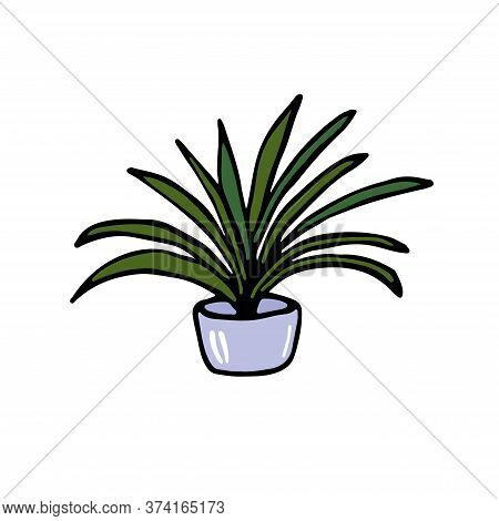 Yucca Plant In A Pot Isolated. Drawn By Hand. Vector Flat House Plant Pot Illustration. Colorful Hou