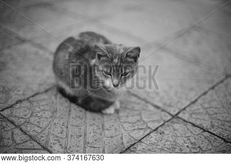 Cute Cat Resting On The Tiled Floor Outdoors. Bw Photo