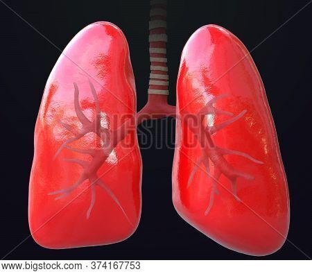 3d Rendering Illustration Lungs Anatomy, Human Respiratory System,lungs 3d, Pneumonia, Coronavirus,