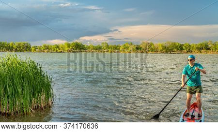 athletic senior male paddler paddling stand up paddleboard on windy lake with green reeds, solo paddling as fitness and training with social distancing