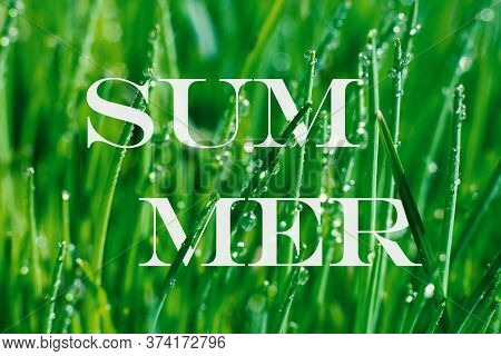 Botanical Green Background With Word Summer With White Letters Pierced By Blade Long Wet Grass With