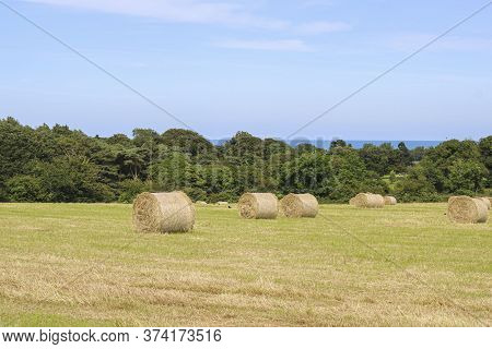Field With Harvested Hay Bales. Hay Bales In The Field