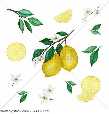 Watercolor Lemon Collection With Lemon Branch, Lemon Slices, Flowers And Leaves, Watercolor Lemon Fr