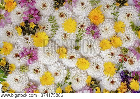 Live Walls Multicolored Flowers