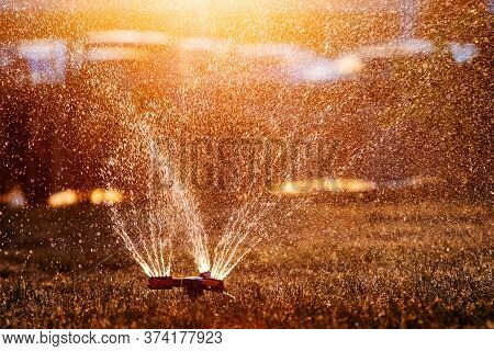 Lawn Sprinkler Spraying Water Over Fresh Lawn Grass In A Garden Or Backyard In The Setting Sun