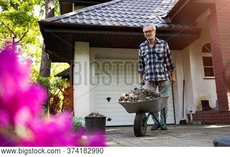 Senior man pushing wheelbarrow while working in his yard