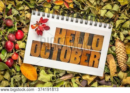 hello October - text in vintage letterpress wood type in an art sketchbook against dry leaves, berries, cones and crab apples, fall holidays greeting card concept
