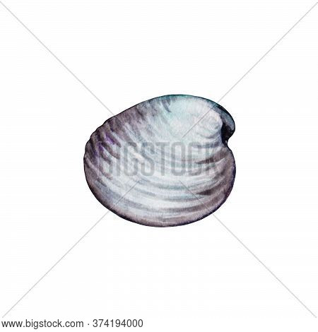 White Seashell Top View Watercolor Illustration. Hand Drawn Close Up Realistic Scallop Element. Tast