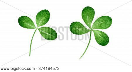 Green Clover Plant Watercolor Illustration. Single Hand Drawn Natural Herb Image. Four Leaf Clover -