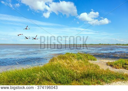 Flock pink flamingos fly over the surf. The huge nature reserve Camargue by the sea.  The Mediterranean coast of France. Concept of eco and photo tourism
