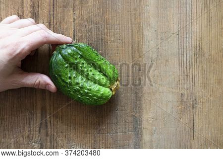 Human Hand Holding Ugly Triple Green Organic Cucumber. Vegetable With Unusual Shape On Brown Wooden