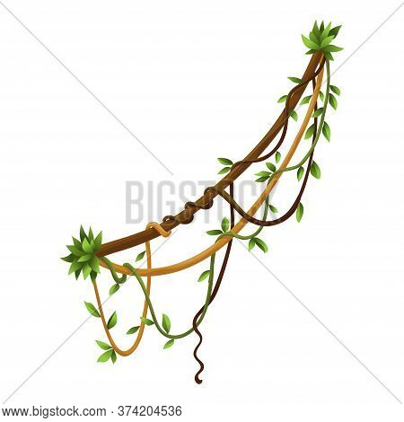 Twisted Wild Lianas Branches Banner. Jungle Vine Plants. Woody Natural Tropical Rainforest