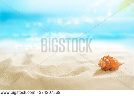 Small red shell in the sand. View of the sunny tropical beach. Summer day.