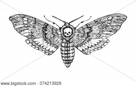 Butterfly Or Wild Moths Insects. Death S Head Hawkmoth. Mystical Symbol Or Entomological Of Freedom.