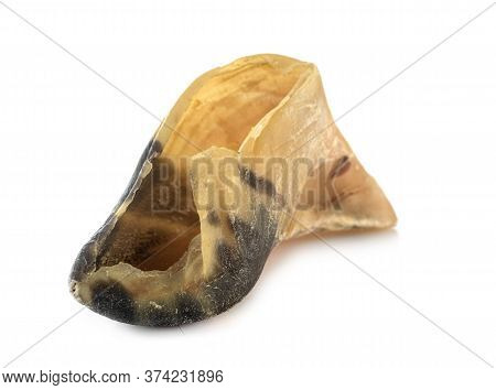 Calf Hoof In Front Of White Background