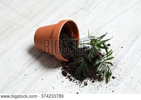 Overturned Terracotta Flower Pot With Soil And Plant On White Wooden Floor