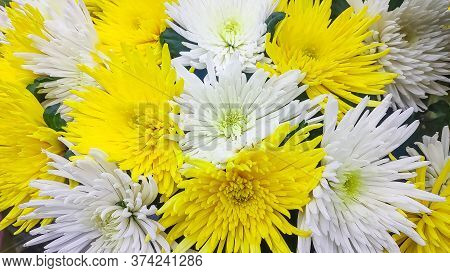The Flowers, Chrysanthemum Flowers Wallpaper Background.march 8 Womens Day Card. Bouquet Of White An