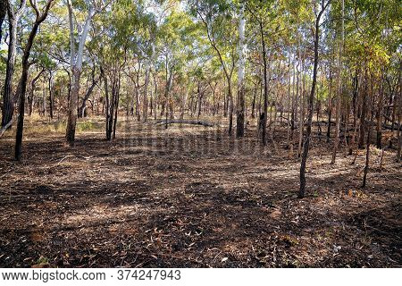 A Controlled Fire Burn In Australian Bushland Fire Set Intentionally For Forest Management