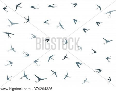 Flying Martlet Birds Silhouettes Vector Illustration. Migratory Martlets Bevy Isolated On White. Swi