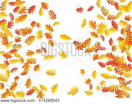 Oak, Maple, Wild Ash Rowan Leaves Vector, Autumn Foliage On White Background. Red Orange Gold Rowan