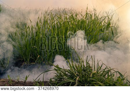 The Silver Smoke In Grass On A Field From Smoke Bomb Against Evening Sun.