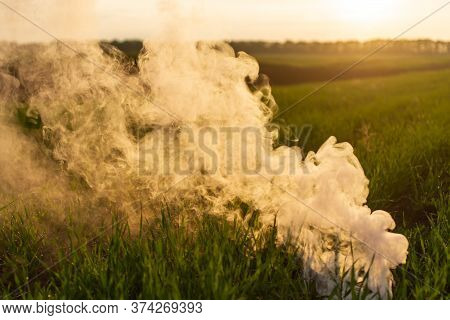 The White Smoke In Grass Against Evening Sun.
