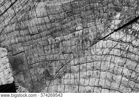 Old Wooden Texured Surface Closeup. Moss And Relief On Surface. Stock Photo Of Old Wooden Pattern Of