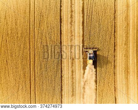 Aerial Drone Top View From Above: Combine Harvesters Working In Wheat Field. Harvesting Machine Driv