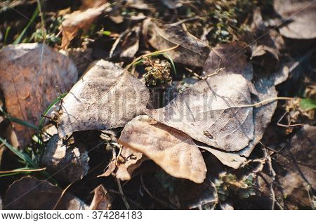 Fallen Withered Brown Leaves On Ground, Chromatic And Light Aberration. Season Change Concept.
