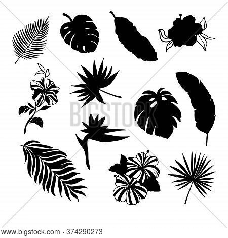 Tropical Leaves Silhouette Set With Some Flowers In Black Color As Coconut, Fan, Banana Palm, Monste