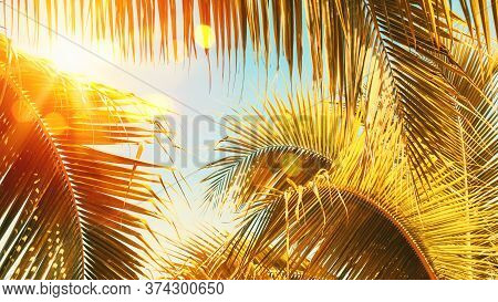 Copy Space Of Silhouette Tropical Palm Tree With Sun Light On Sunset Sky And Cloud Abstract Backgrou