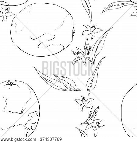 Black And White Seamless Pattern Sicilian Orange And Flowers Contour