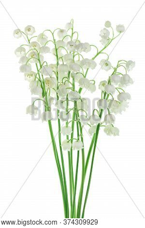 Lilly Of The Valley Flowers Isolated On White Background With Clipping Path And Full Depth Of Field