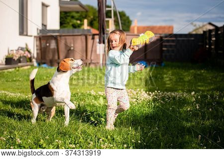 Young 2-3 Years Old Caucasian Baby Girl Playing With Beagle Dog In Garden. Dog Chasing A Girl With A