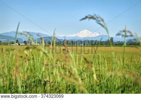 Fraser Valley Mt Baker View. Mt. Baker Rising In The Background Of A Field In The Fraser Valley.