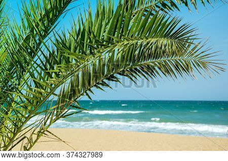 Palm Tree Foliage Against Seascape In Summertime. Palm Leafage Near Waterfront Of Ocean. Tropical Sh