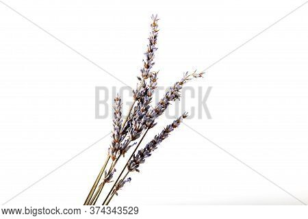 Dry Lavender Flower Isolated On White Background. Lavandula (common Name Lavender) Is A Genus Of 47