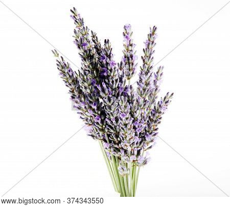 Lavender Flower Isolated On White Background. Lavandula (common Name Lavender) Is A Genus Of 47 Know