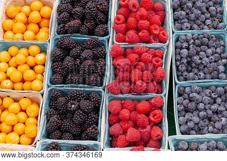 Organic Fresh Berries In A Small Blue Carton Boxes. Picking Berry At American Farm. Selling Fresh Ju