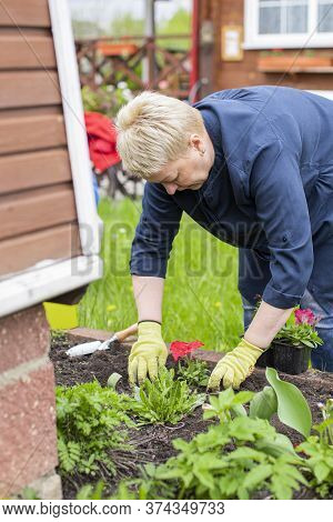 Female Middle-aged Gardener Planting Flowers On Decorative Flower Bed Amidst A Green Countryside. Pl