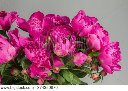 Bouquet Of Pink Peonies In Glass Vase On Gray Background, Greeting Card Concept