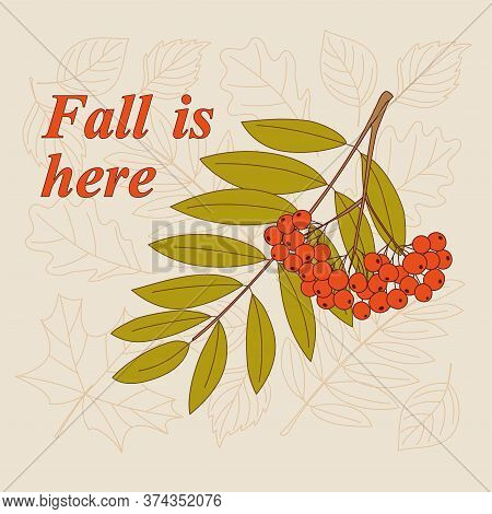 Rowanberry Twigs, Contour Drawing Autumn Leaves And Slogan Fall Is Here. Vector Illustration Templat