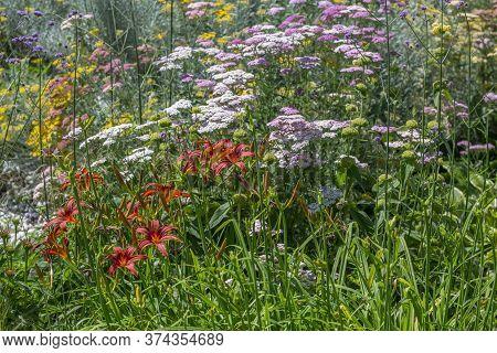 A Garden With Perennials Flowers Close Up