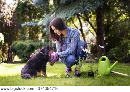 Full Length Shot Of Young Woman Gardening At Home In The Backyard While Her Cute Cavalier Puppy Sitt
