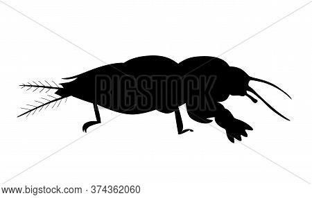 European Mole Cricket. Black Hand Drawing Silhouette Vector Image.