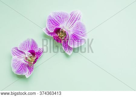 Beautiful Tropical Orchid Flowers On Green Soft Background. Flat Lay, Top View.flowers Flat Lay Comp