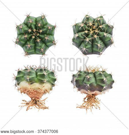 Collection Of Tropical Cactus Isolated On White Background.