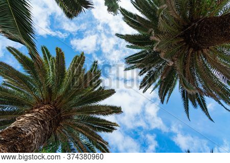 Beautiful Green Palm Trees Against The Blue Sunny Sky With Light Clouds Background. Tropical Wind Bl