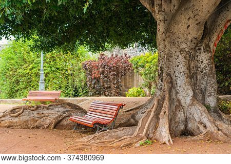 Red Bench Sitting Surrounded By Big Roots Under The Green Giant Tree.