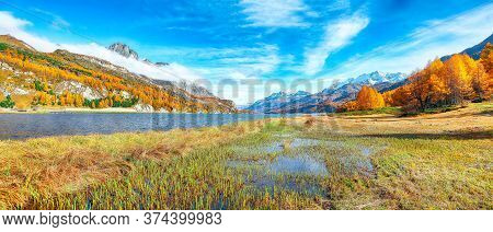 Stunning Autumn Scene In Swiss Alps And Views Of Sils Lake (silsersee). Colorful Autumn Scene Of Swi